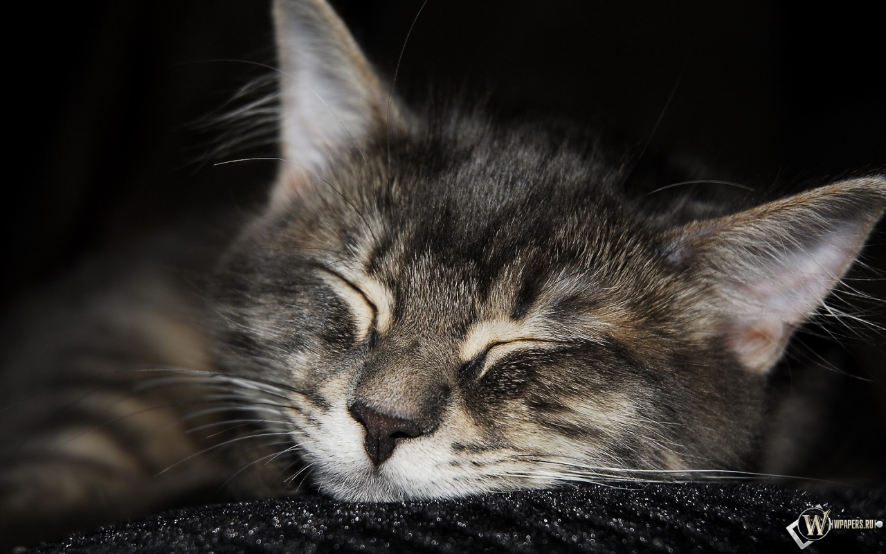 кот спит 1280x800