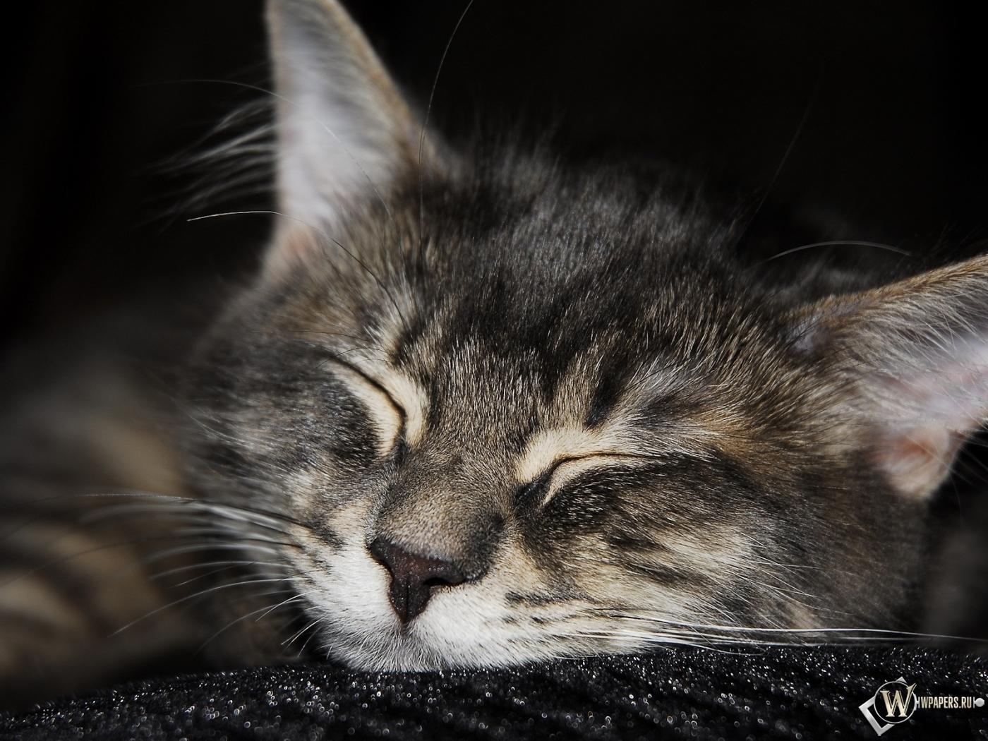 кот спит 1400x1050