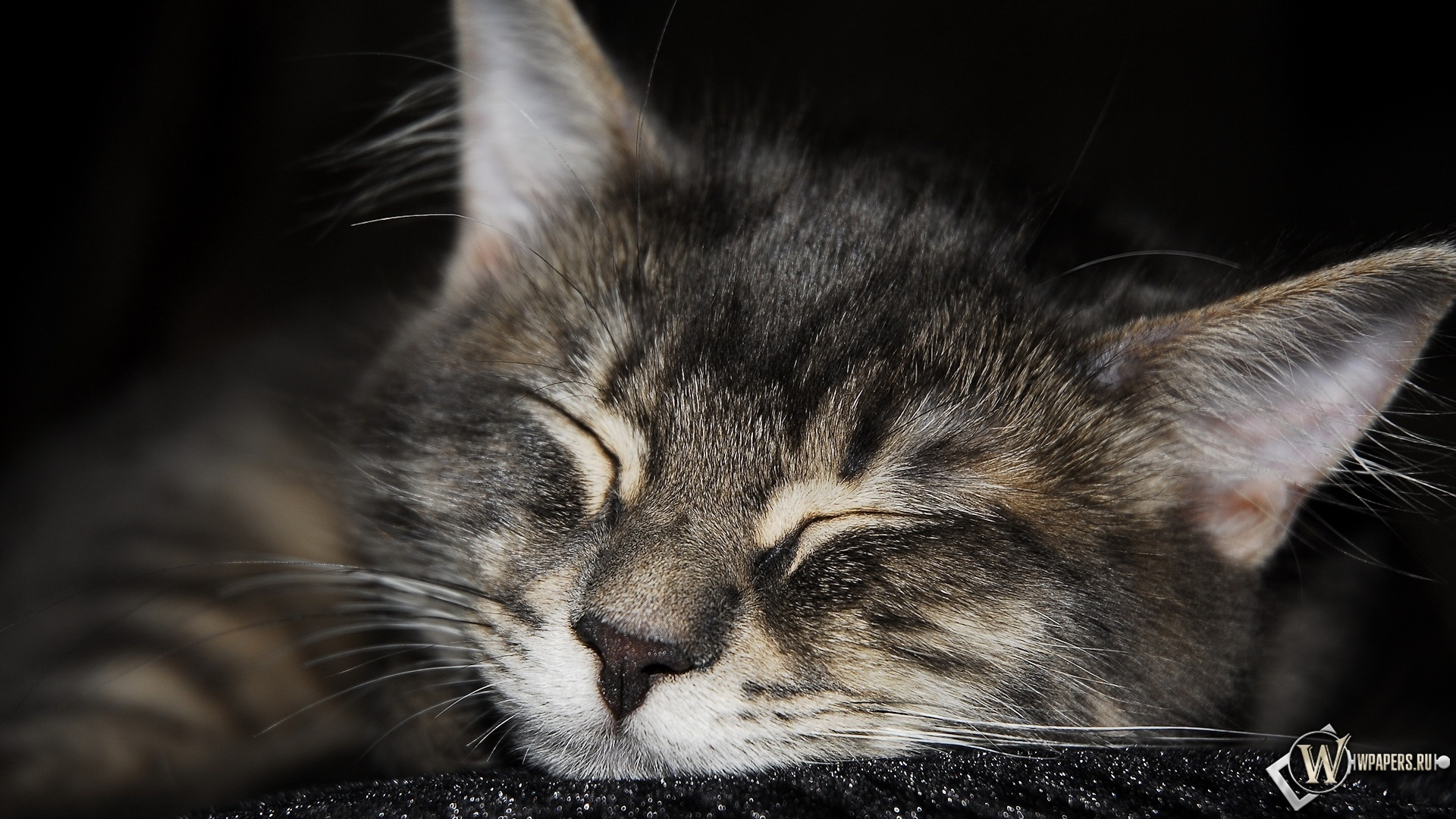 Мордашка котов