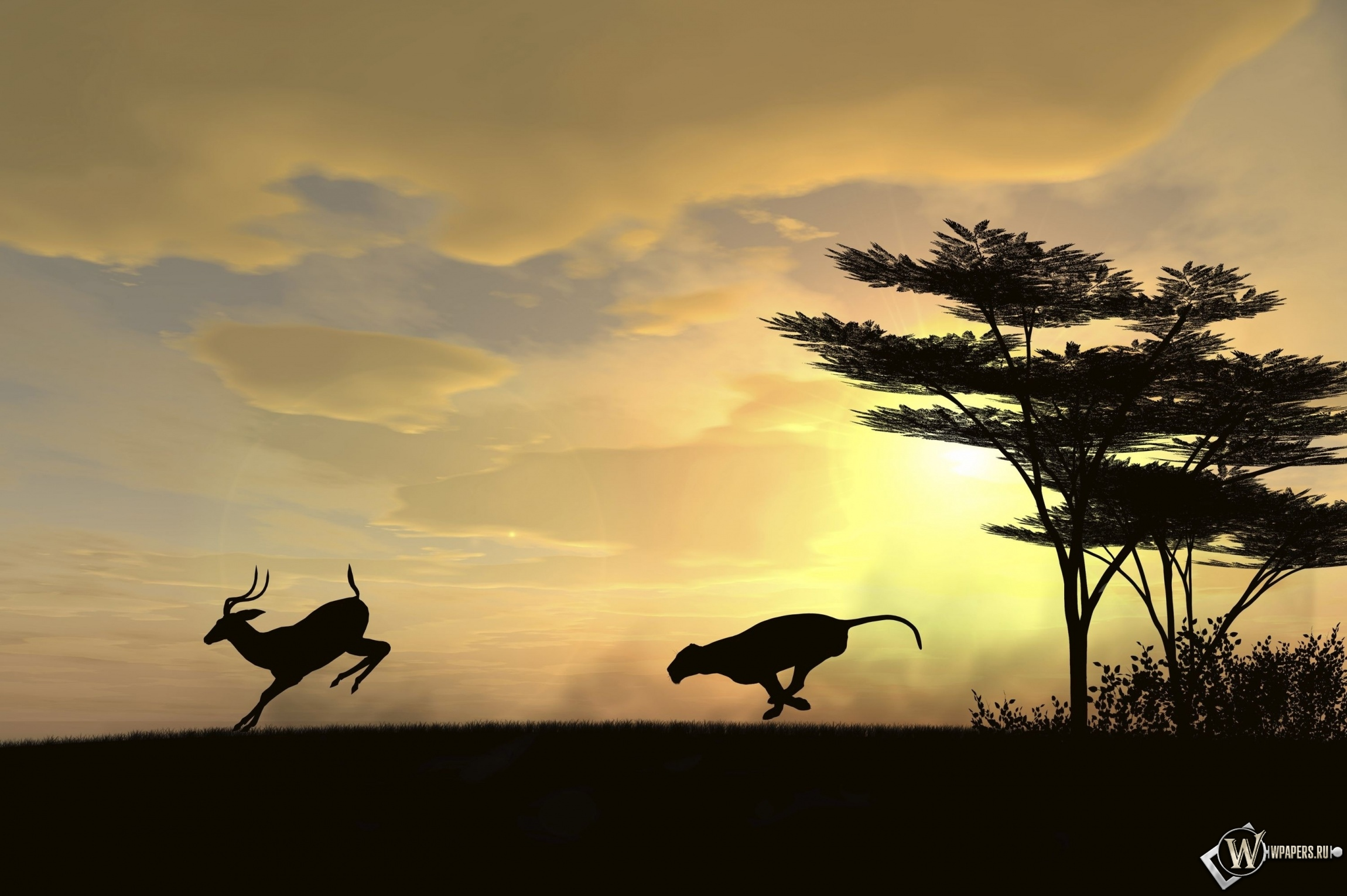 Охота гепарда 2300x1530