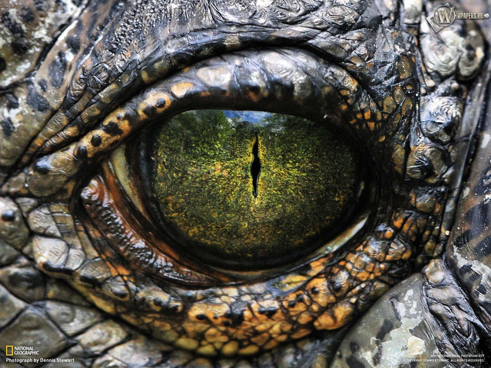Глаз рептилии 1600x1200