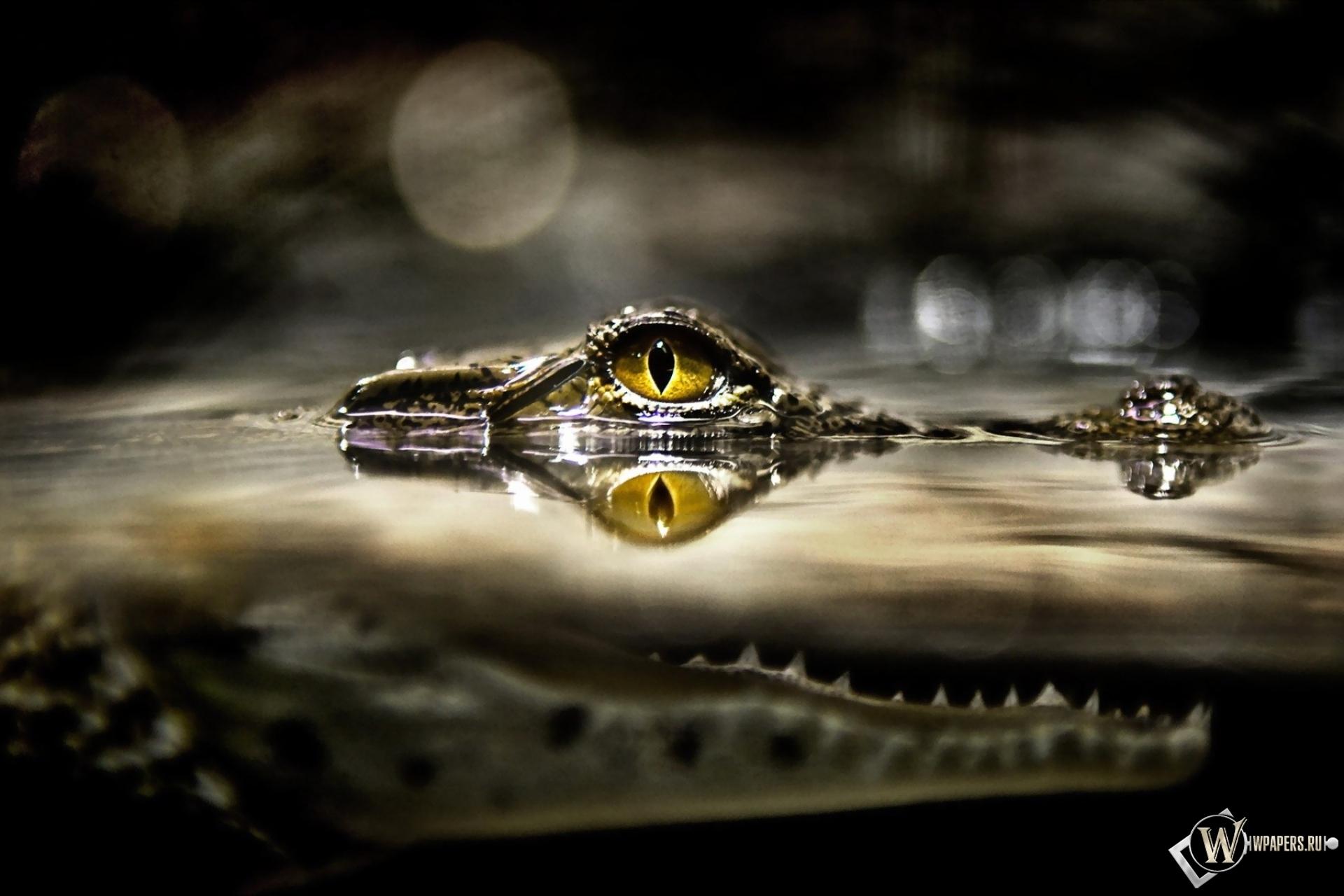 Обои рабочего стола крокодилы 8