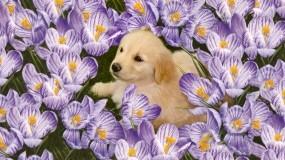 Обои Щенок в цветах: Щенок, Цветы, Полянка, Собаки