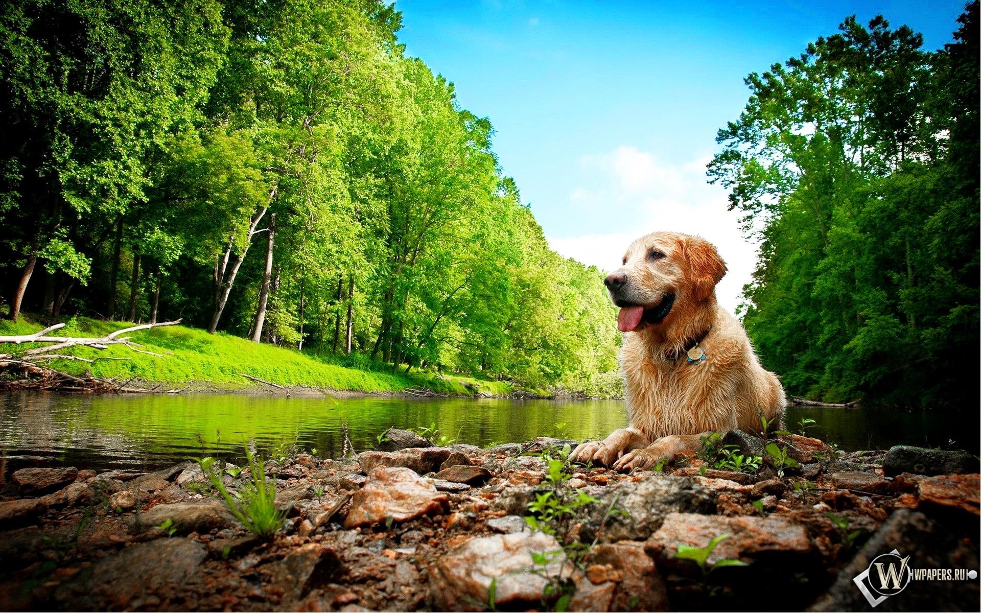 Собака на природе 1920x1200
