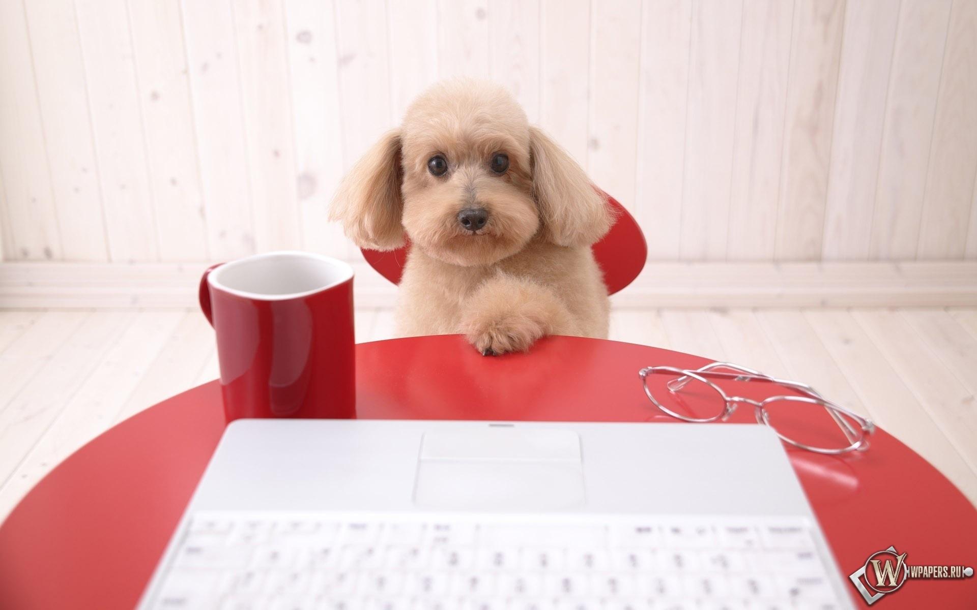 Собака с ноутбуком 1920x1200