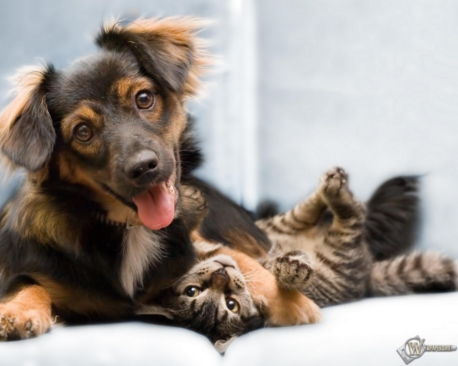 это котенок и щенок картинки отслеживание