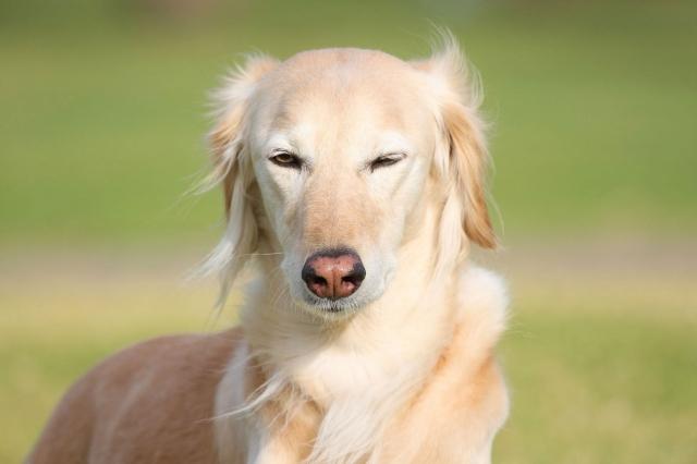 Довольная собака