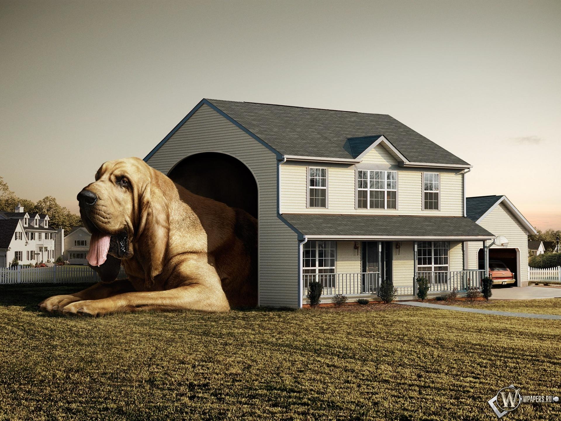 Самая большая собака 1920x1440