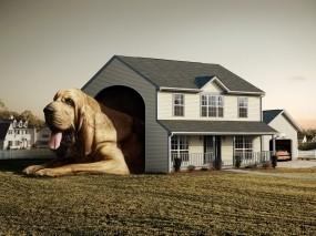 Обои Самая большая собака: Дом, Собака, Будка, Собаки