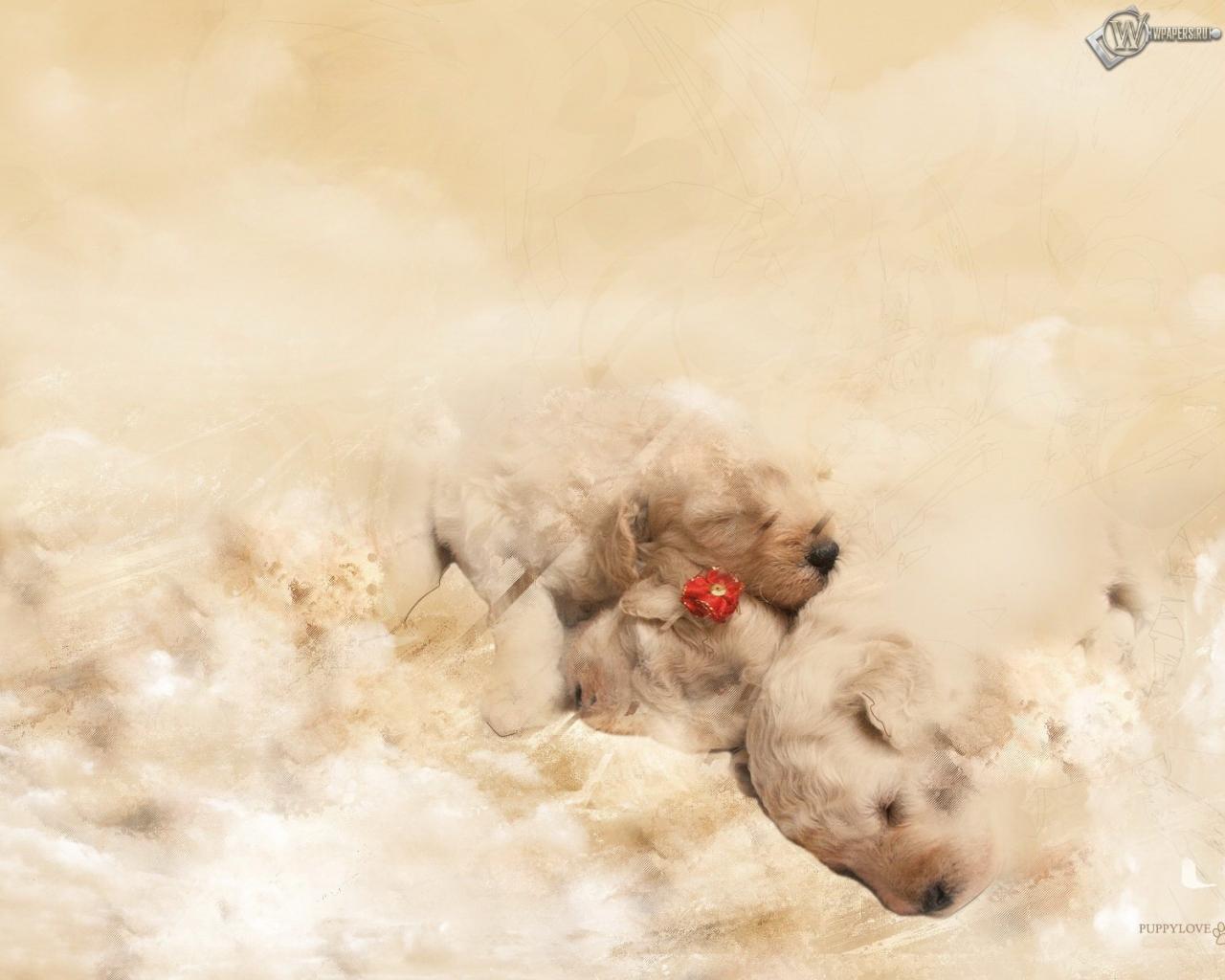 Красивые щенята фото