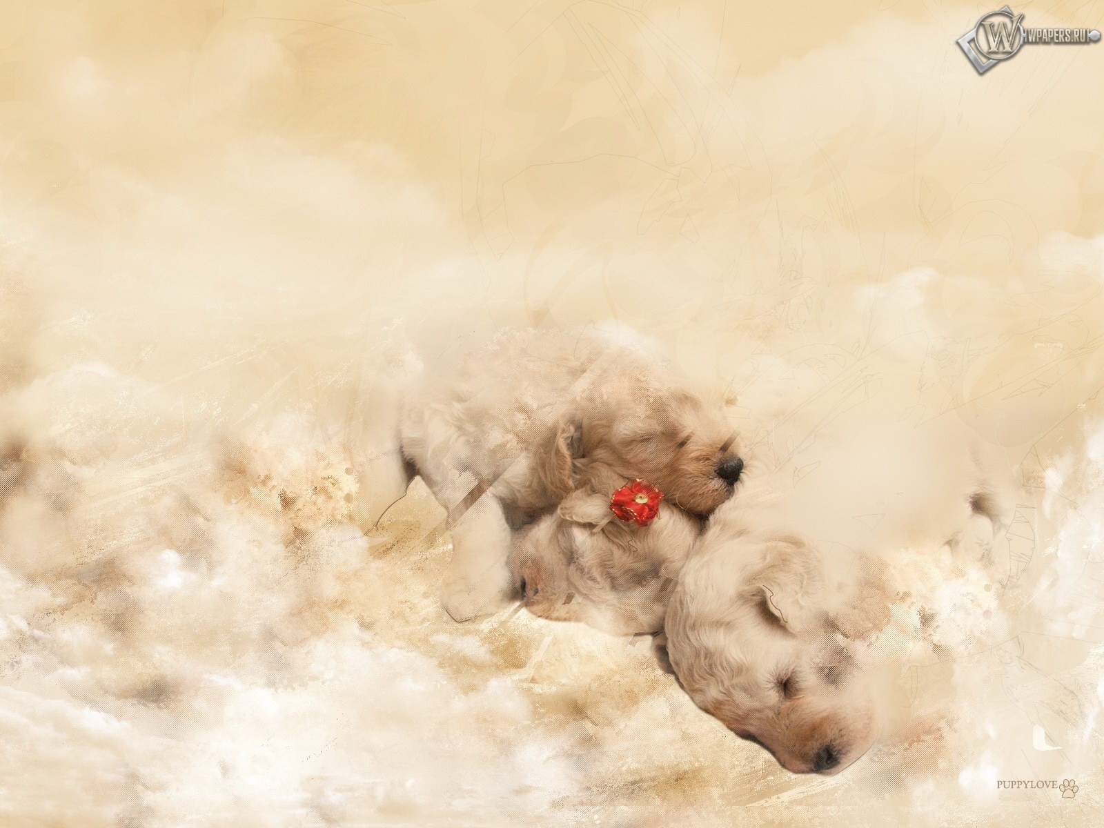 Маленькие щенята 1600x1200