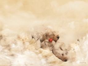 Обои Маленькие щенята: Белый, Щенки, Малыши, Щенята, Собаки