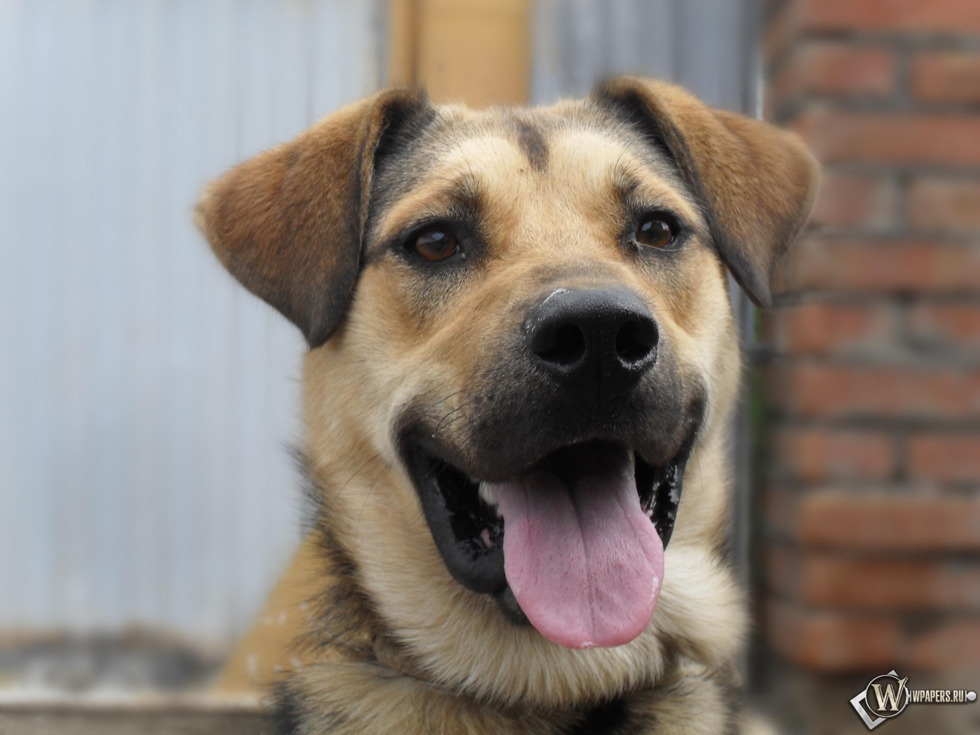 My love dog 3200x2400