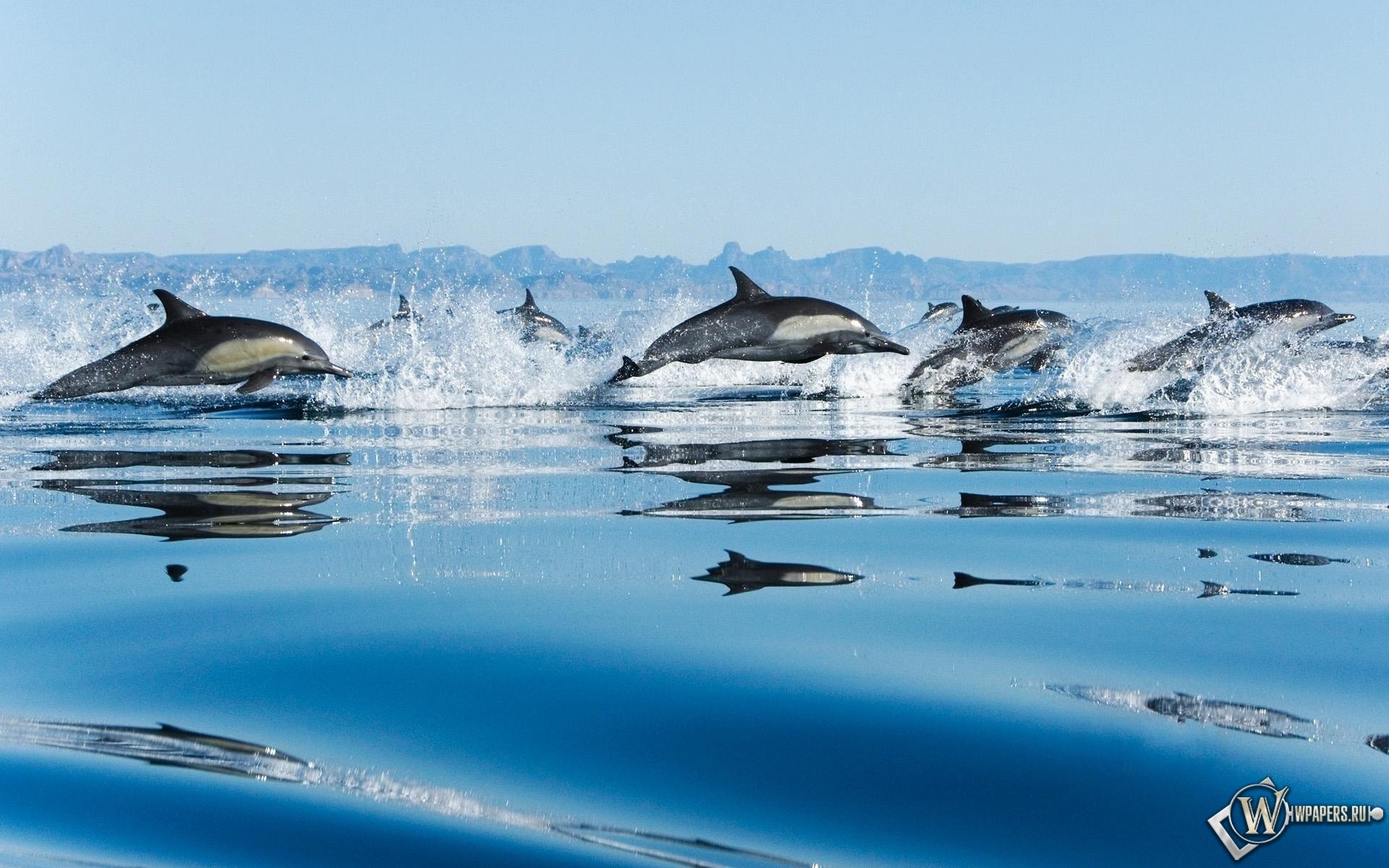 Дельфины 1920x1200