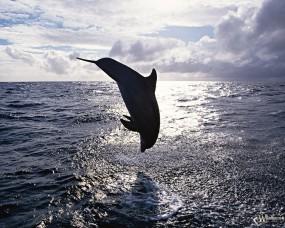 Обои Прыжок дельфина: Прыжок, Дельфин, Дельфины