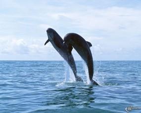 Обои Дельфины в прыжке: Прыжок, Дельфины, Дельфины