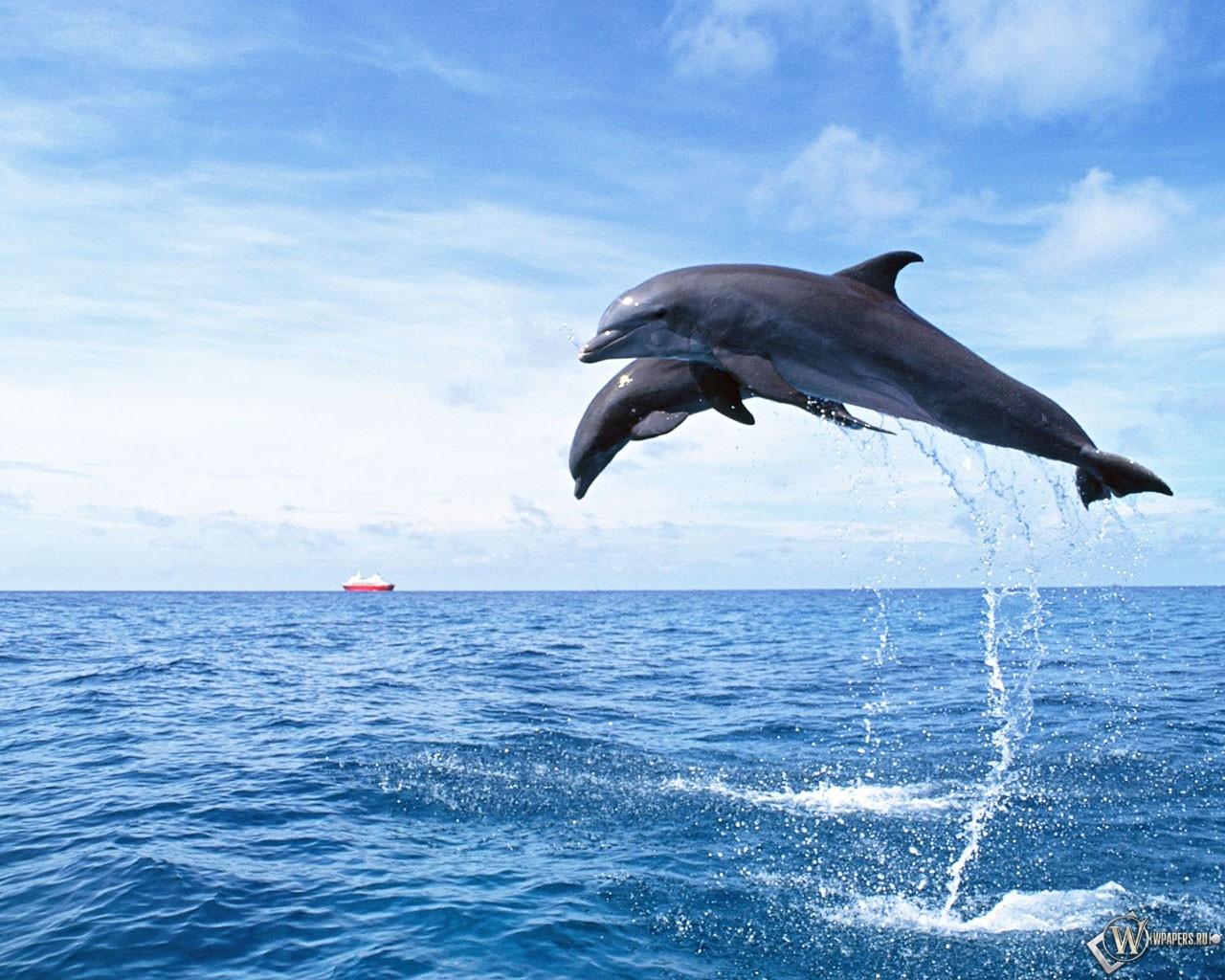 Дельфины в прыжке 1280x1024