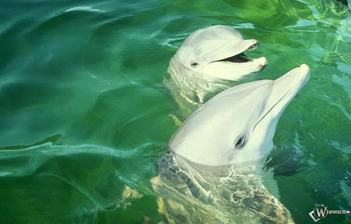 Улыбающиеся дельфины 1200x768