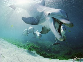Обои Зубастый дельфин: Зубы, Под водой, Дельфин, Дельфины