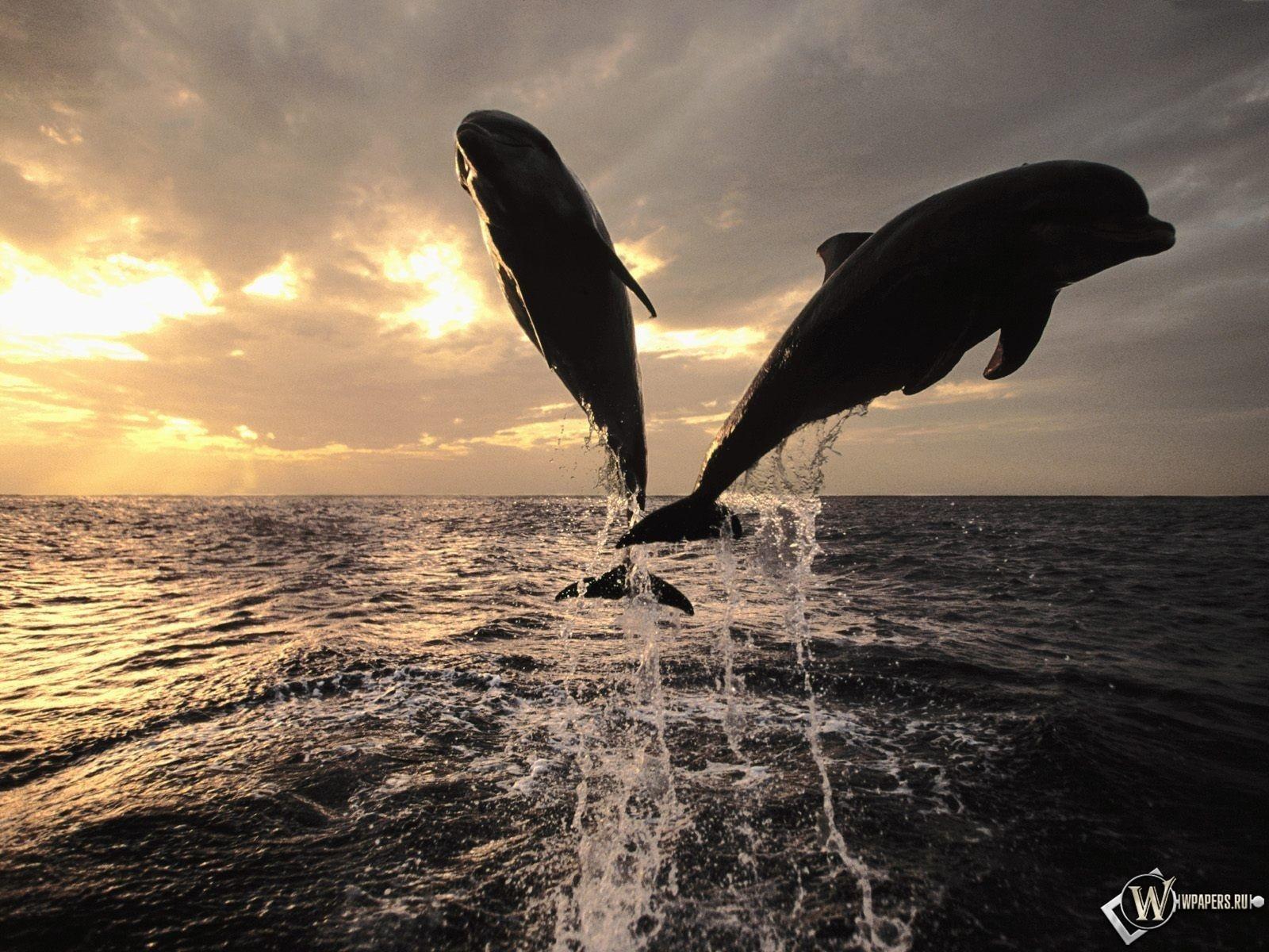 Прыгающие дельфины 1600x1200