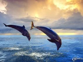 Обои Дельфины в прыжке: Море, Прыжок, Дельфины, Дельфины