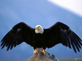 Орел расправил крылья