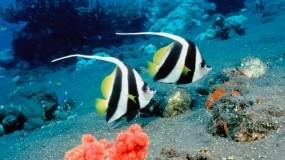Обои Ocean Life: Рыбы, Под водой, Коралл, Рыбы