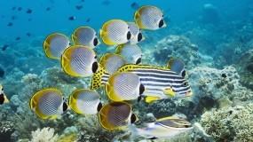 Обои Подводный мир: Океан, Рыбы, Кораллы, Рыбы