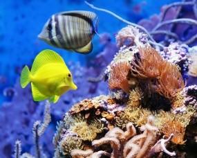 Обои Экзотические рыбки: Аквариум, Рыбки, Рыбы