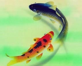 Обои Карпы: Рыба, карп, Рыбы