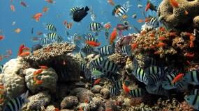 Обои Подводный мир Шарм-эль-Шейха: Вода, Рыбы, Рыбы