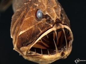 Обои Саблезуб: Пасть, Зубы, Рыба, Рыбы