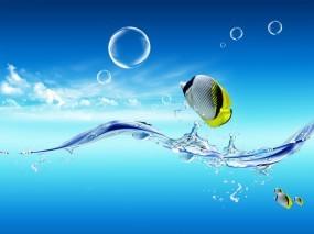 Обои Рыбки: Вода, Небо, Рыбки, Рыбы