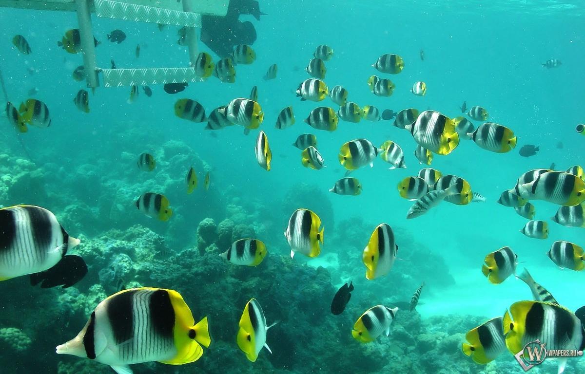 Полосатые рыбки 1200x768