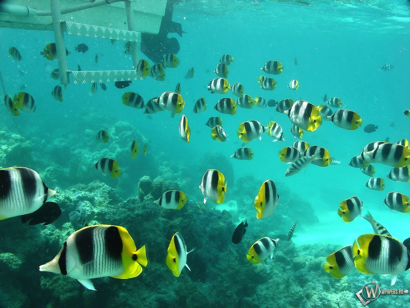 Полосатые рыбки 1600x1200