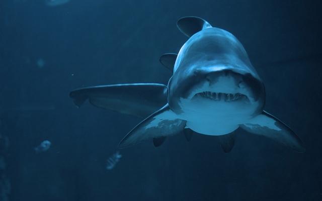 Акула на глубине