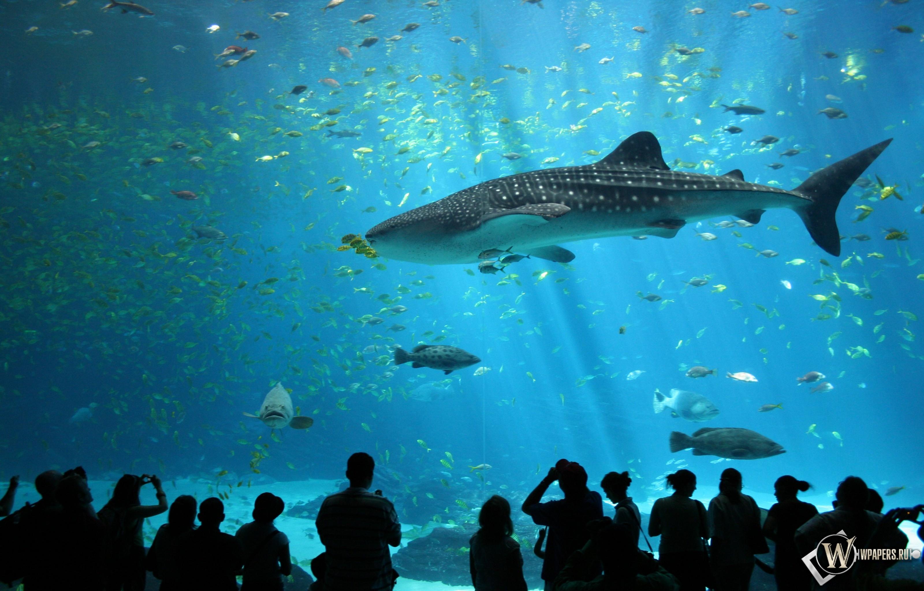 Акула в аквариуме 3200x2048