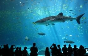 Обои Акула в аквариуме: Аквариум, Рыбки, Акула, Люди, Рыбы