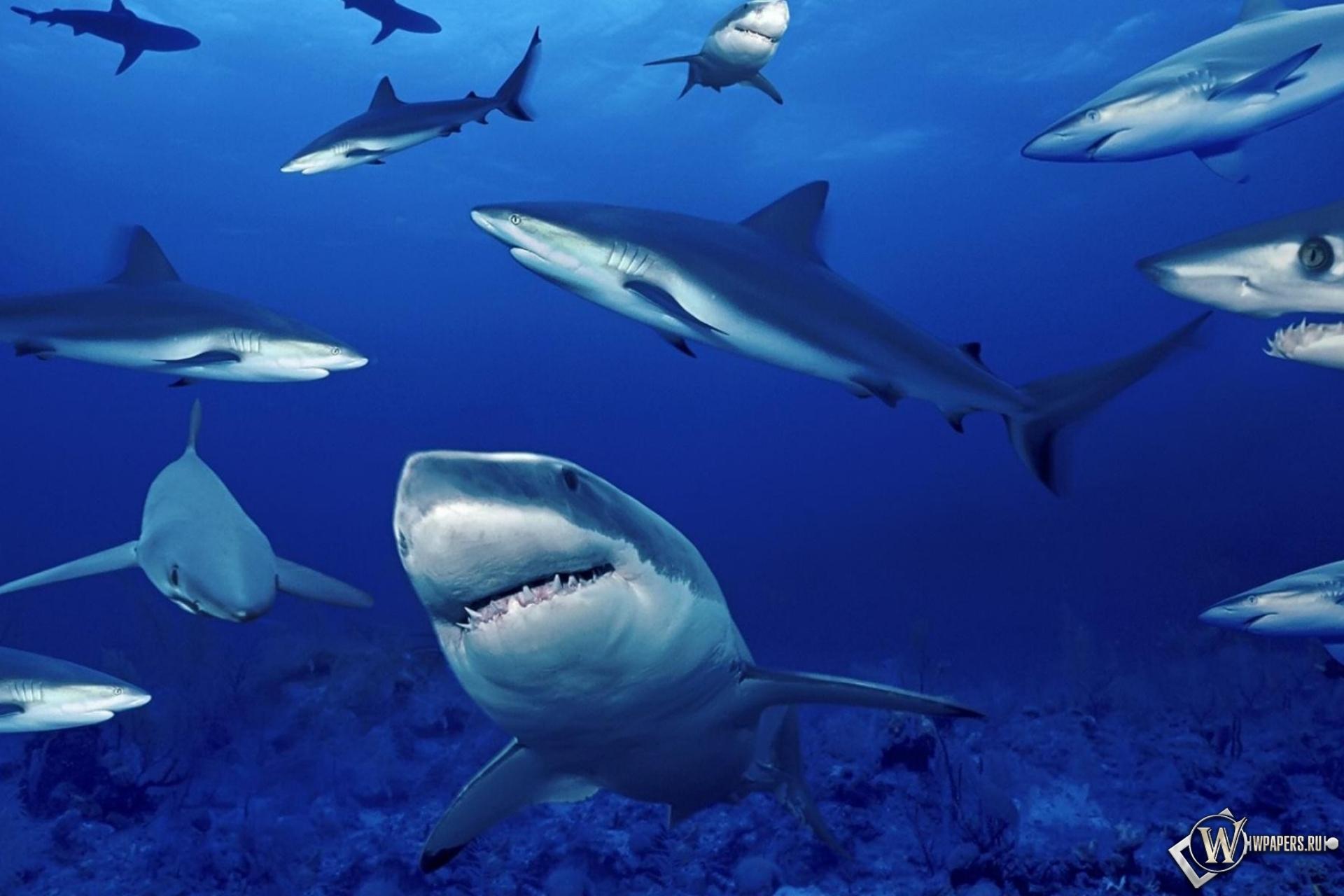 Скачать обои для рабочего акулы стола бесплатно 4