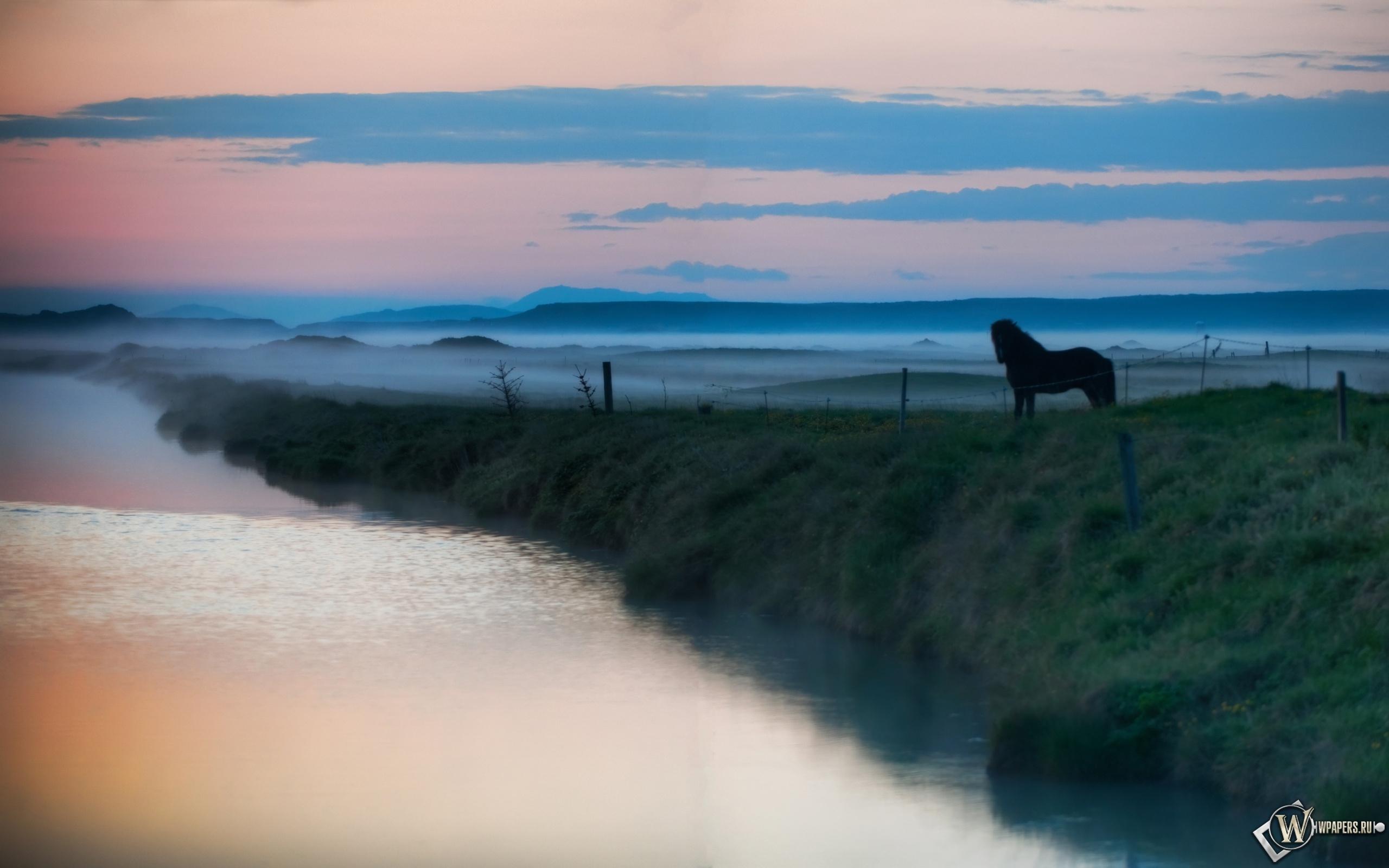 Лошадь в тумане 2560x1600