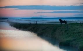 Обои Лошадь в тумане: Река, Вода, Озеро, Животные, Лошадь, Лошади, Лошади