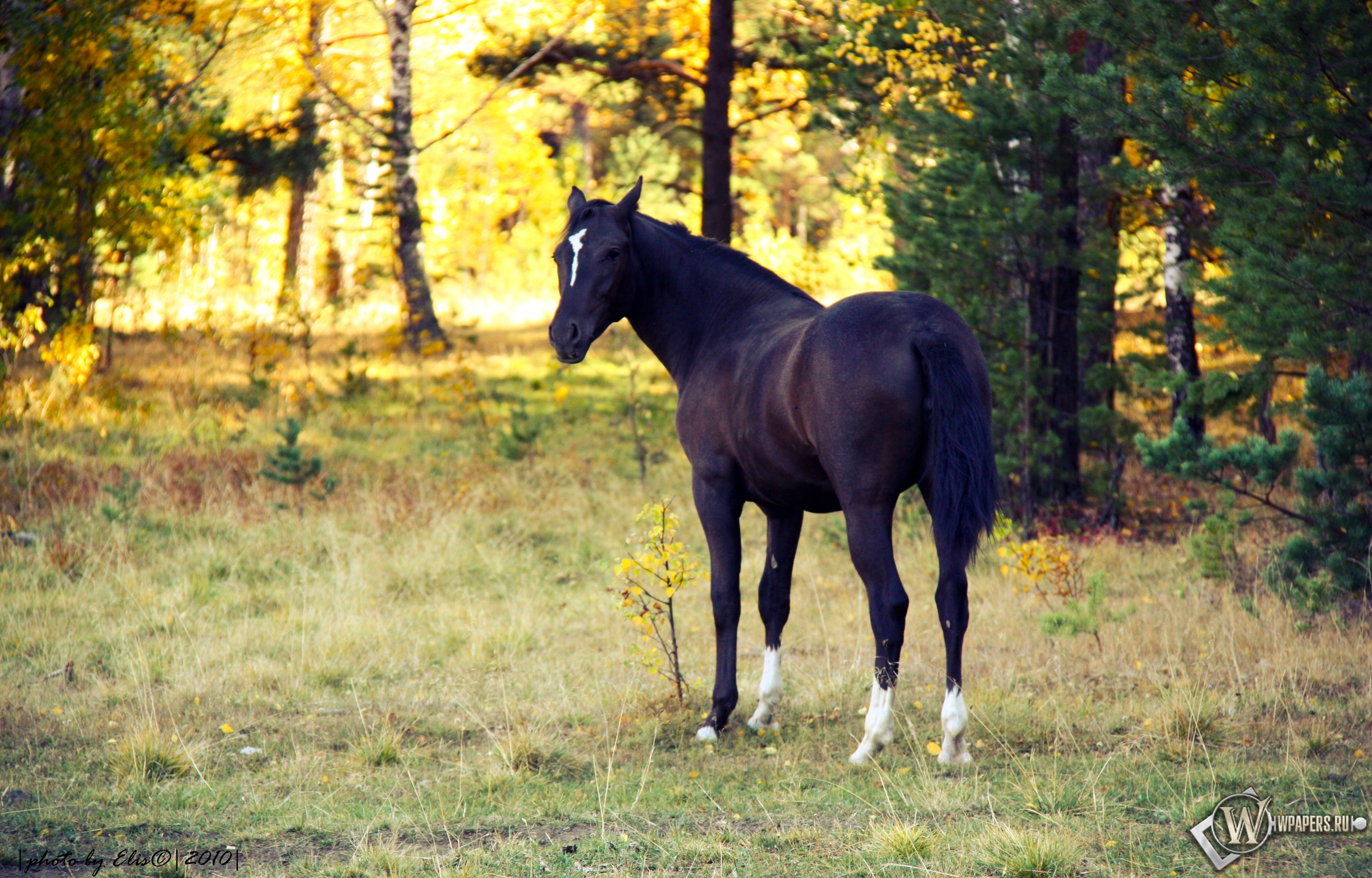 Лошадь в лесу 3200x2048