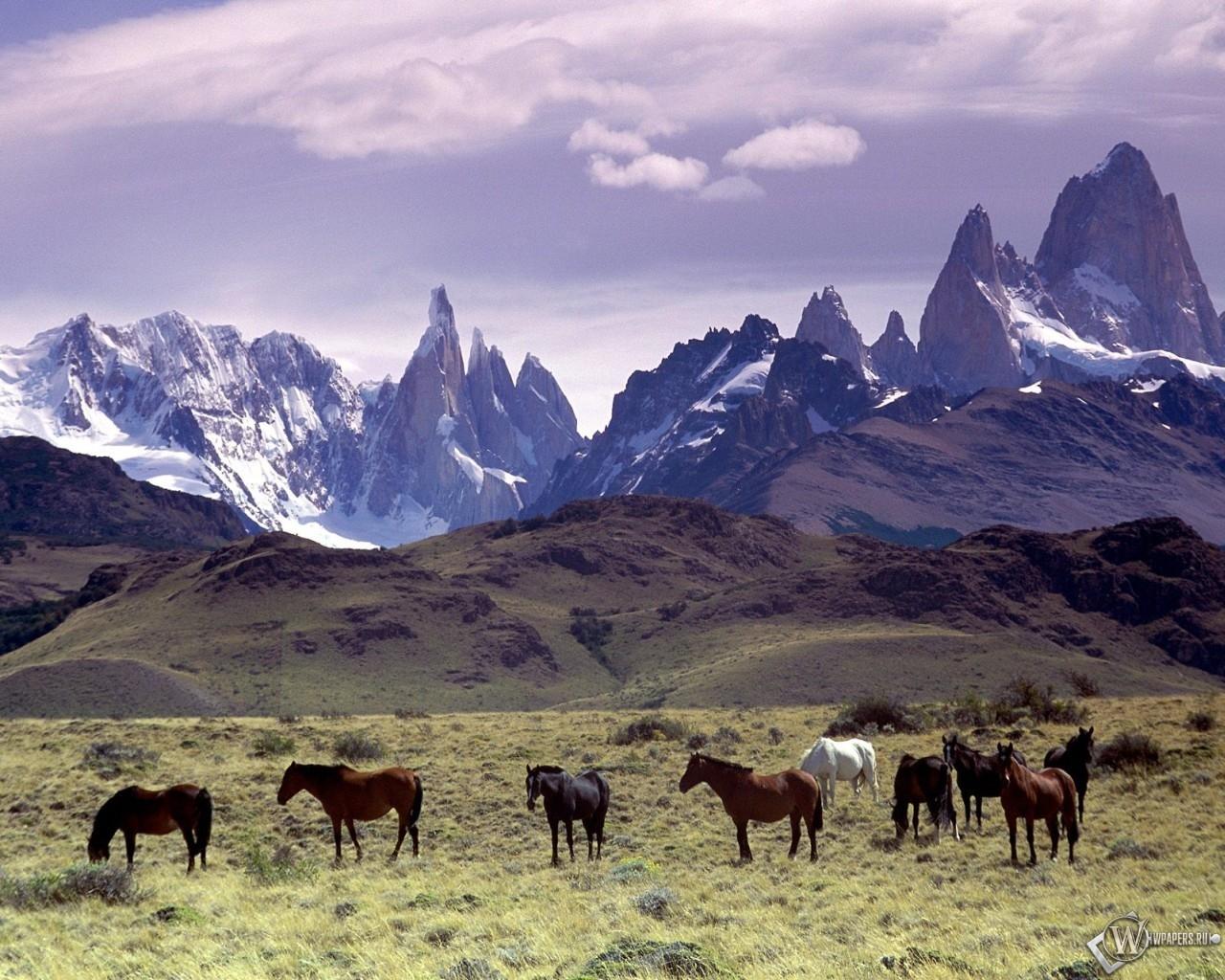 Кони в горах 1280x1024