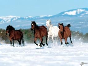 Обои Четыре коня бегут по снегу: , Лошади