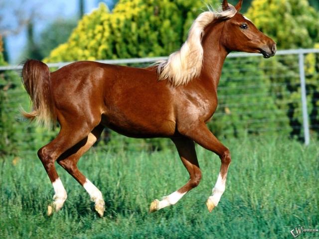 Коричневая лошадь с белой гривой