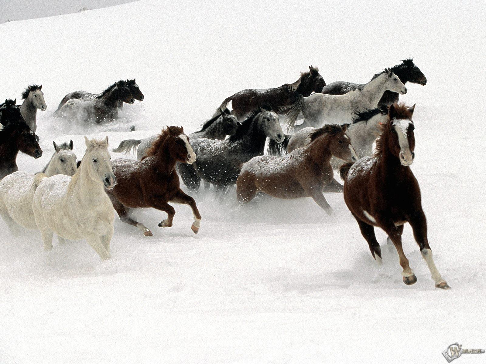 Кони бегущие по снегу 1600x1200