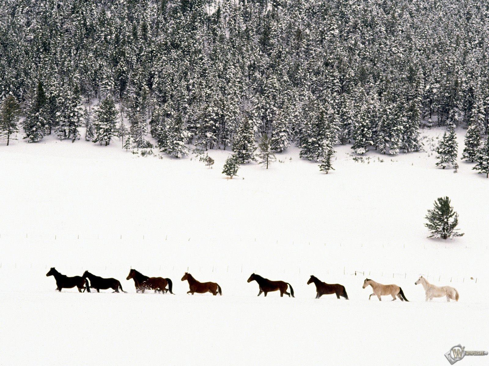 Лошади на снегу 1600x1200