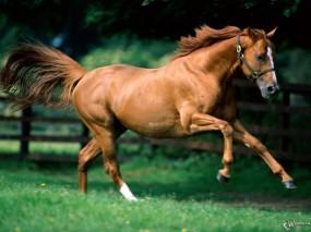 Обои Серая лошадь: , Лошади