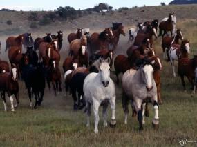 Обои Табун коней: , Лошади