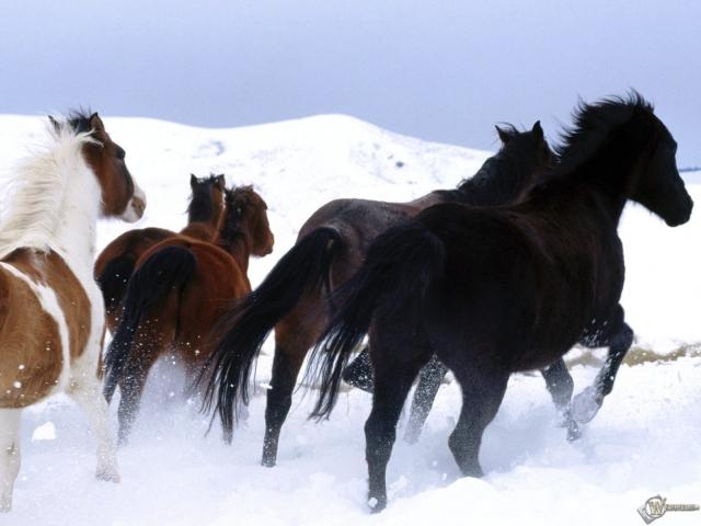 Лошади на снегу